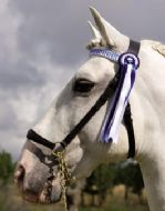 De-Luxe In hand show halter with presentation browband